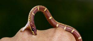 National Guideline for Snake bite Management in Nepal 2019