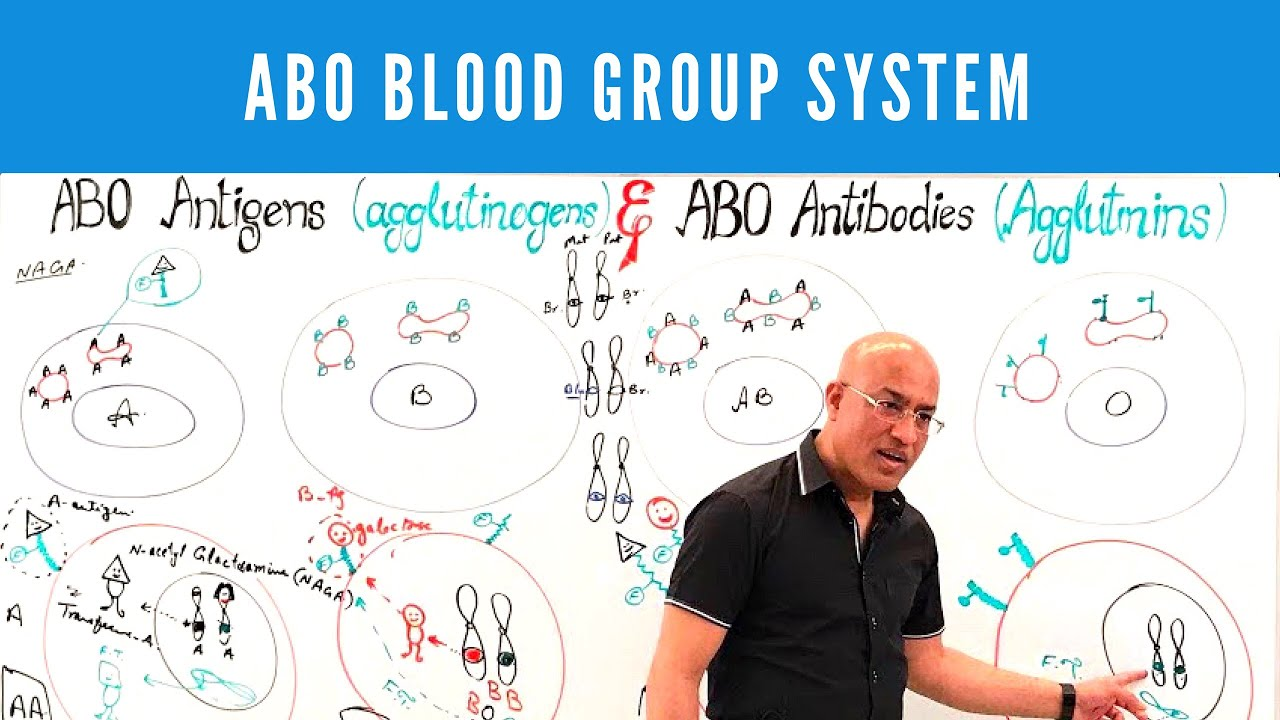 abo blood group system by dr naj