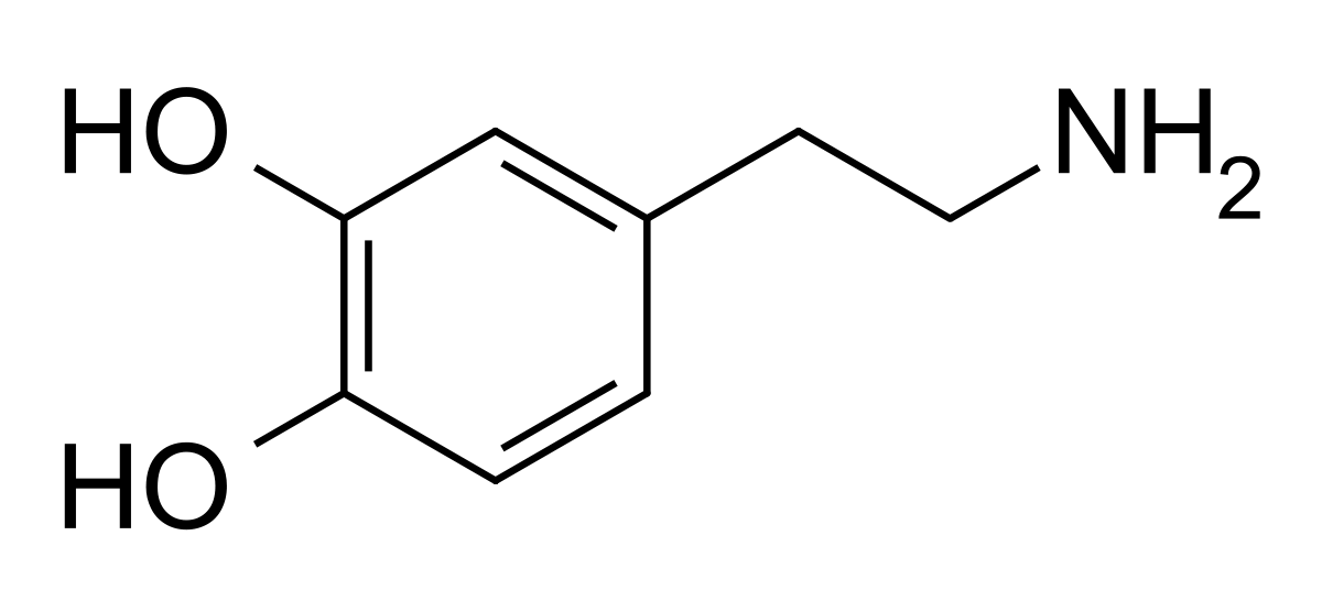 Serotonin vs dopamine